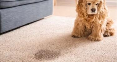 stain guide | O'Krent Floors