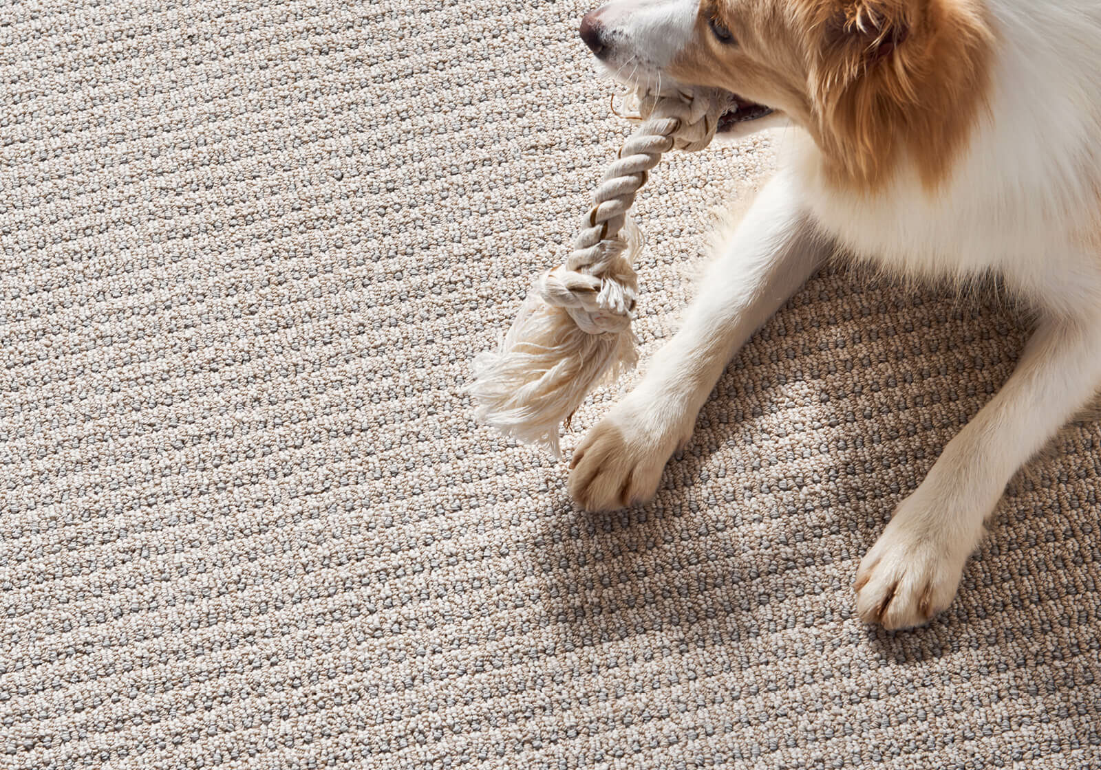 Pet friendly floor | O'Krent Floors