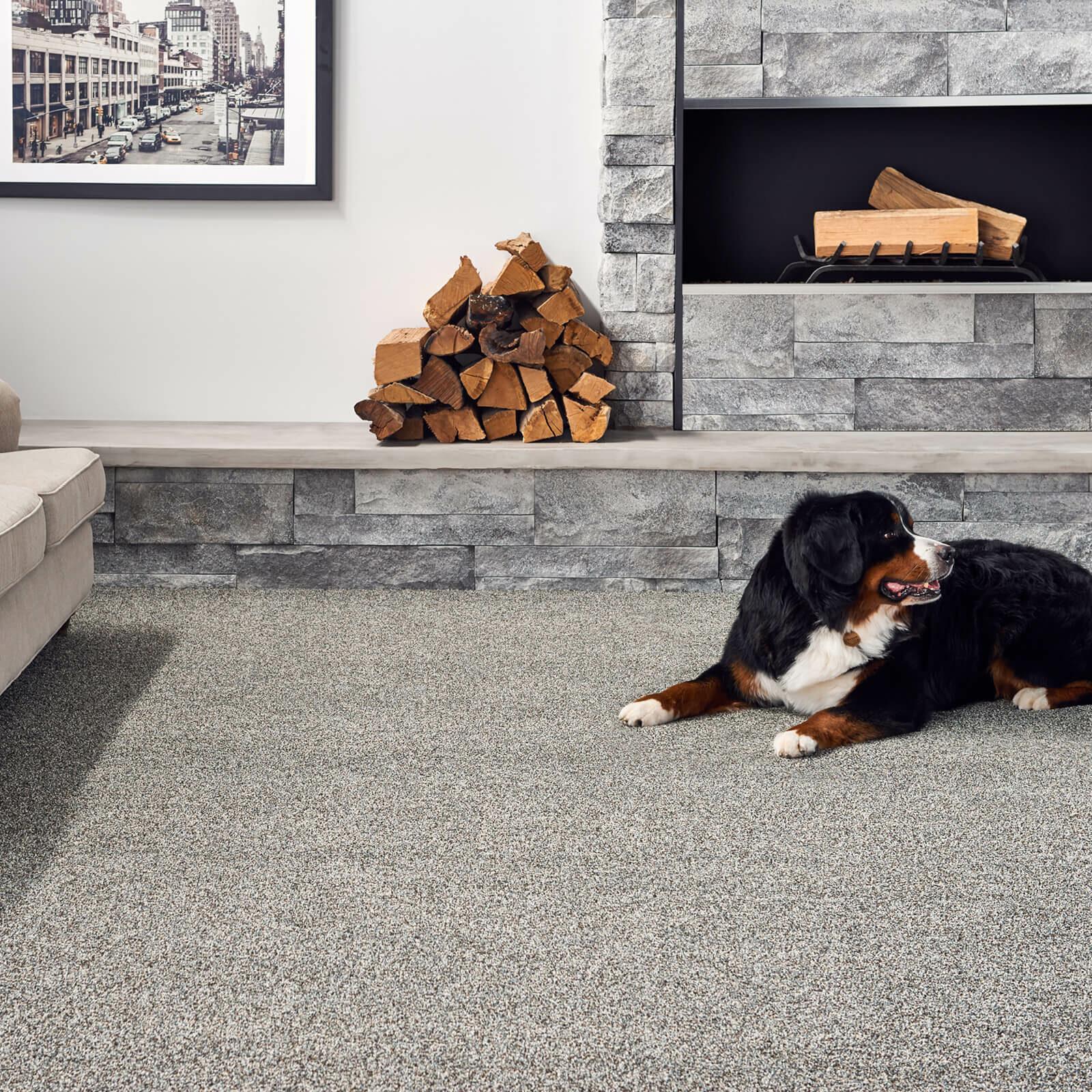Pet friendly carpet   O'Krent Floors